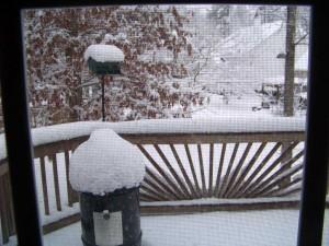 12/26/2010 backyard